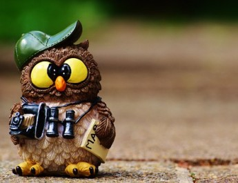 owl-964011__340